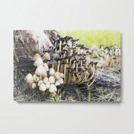 Shaggy Ink Cap Mushrooms 10 Metal Print