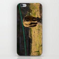 Monkey Business I iPhone & iPod Skin