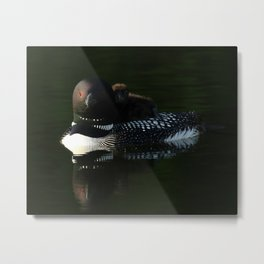 Mother and baby loon Metal Print
