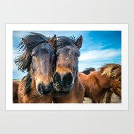 Icelandic Horses Art Print
