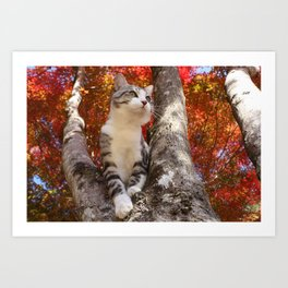 Cat who came to watch the autumn leaves Art Print