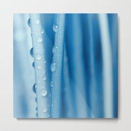 Blue grass 33 Metal Print