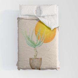 Hand Drawn Set, Bohemian Pot Of Aloe, sunshine, minimal potted plants, No 01 Comforters