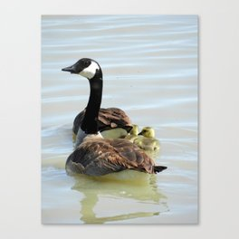 Protecting The Goslings Canvas Print