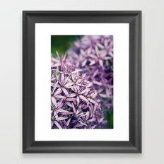 Vintage Purple Poppies  Framed Art Print