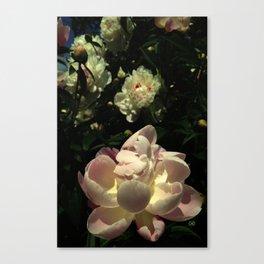 Peony 11 Canvas Print