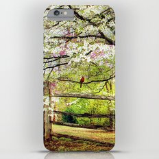 Dogwoods and Red Birds iPhone 6 Plus Slim Case