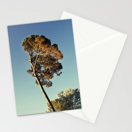Pine Stationery Cards
