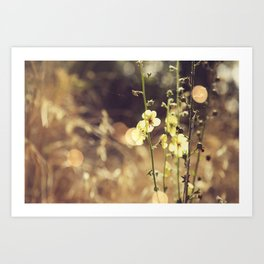 Summer Fields | 02 Art Print