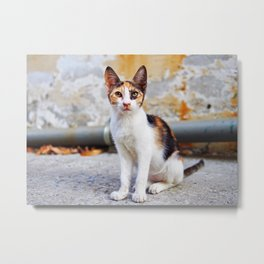 Little Greek kitten Metal Print