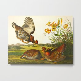 Pinnated Grouse Bird Metal Print