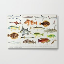 Illustrated Colorful Southern Pacific Exotic Game Fish Identification Chart No. 2 Metal Print