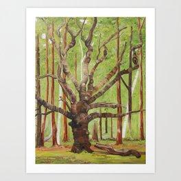 Ancient Oak Art Print