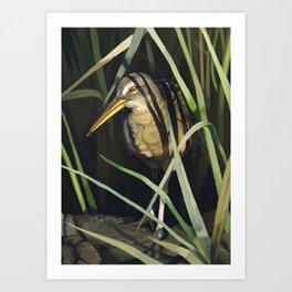 Clapper Rail in Reeds Art Print