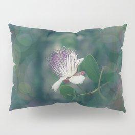 Caper flower Pillow Sham