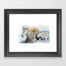 goat snow and cub Framed Art Print