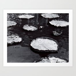 Black and White Large Lily Pads in Water Art Print Art Print