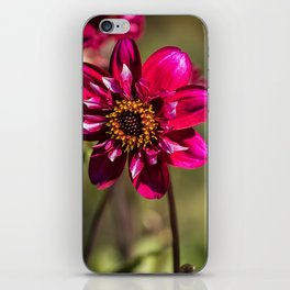 Darling Dahlia iPhone Skin