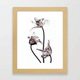 SKULL  X-RAY Framed Art Print