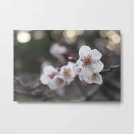 The Early Cherry Blossom Metal Print