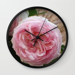 Fascinating Gorgeous Pink Roes Blossom Close Up Ultra HD Wall Clock