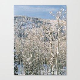 Cottonwood Canyon Canvas Print