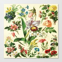 botanical Canvas Prints featuring Botanical by bbay