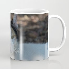 Cat Dubrovnik Coffee Mug