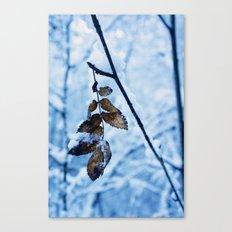 A little colour remains Canvas Print