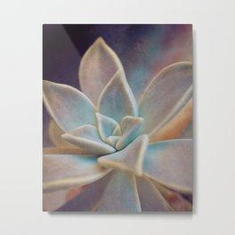 Botanical -- Blue Ghost Plant Succulent (Graptopetalum paraguayense ) Metal Print