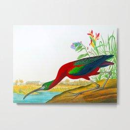 Glossy Ibis Bird Metal Print