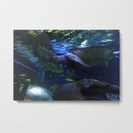 Shark&Turtle Metal Print