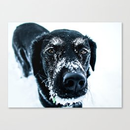 Snow Dog // Cross Country Skiing Black and White Animal Photography Winter Puppy Ice Fur Canvas Print