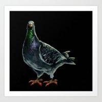 pigeon Art Prints featuring Pigeon by Sarah Jane Rozman