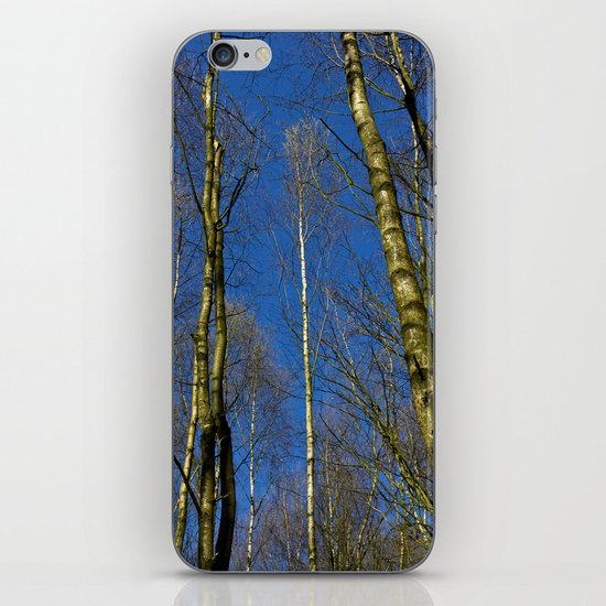 The Still forest iPhone & iPod Skin