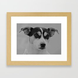 The Jack Russel  Framed Art Print