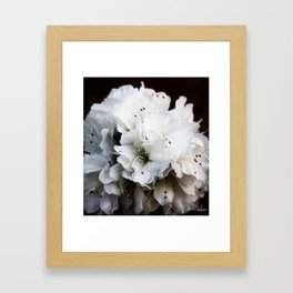 Azalea Bouquet Framed Art Print