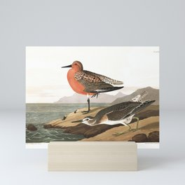 Red-breasted Sandpiper by John Audubon Mini Art Print