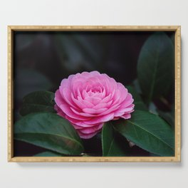 Pink Perfection Camellia Japonica is Blooming Serving Tray