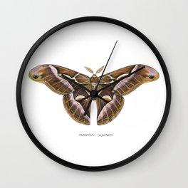 Ailanthus Silkmoth (Samia cynthia) Wall Clock