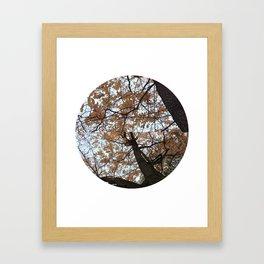Fall Leaves 2 Framed Art Print