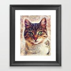Cat Saba Framed Art Print