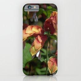 Shrimp Plant - Justicia brandegeana iPhone Case
