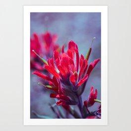Indian Paintbrush Groovy Wildflower Art Print