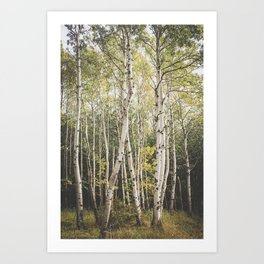 Autumn in Maine Art Print