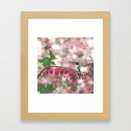 ruby-throated hummingbird on bleeding heart (with bokeh) Framed Art Print
