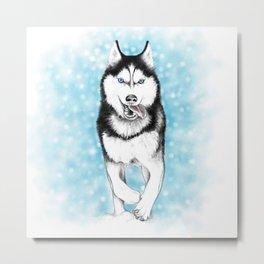 Siberian Husky Metal Print