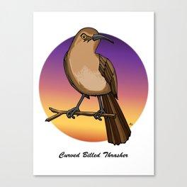 CURVE-BILLED THRASHER Canvas Print