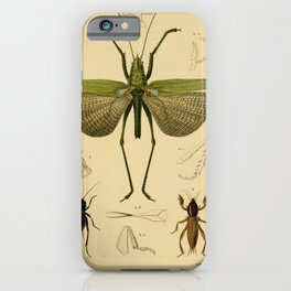 Vintage Print - Universal Dictionary of Natural History (1849) - Locusts; Crickets iPhone Case