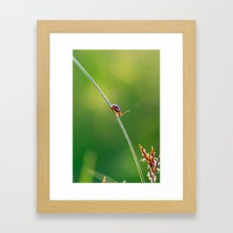 Little red bug perching on grass Framed Art Print
